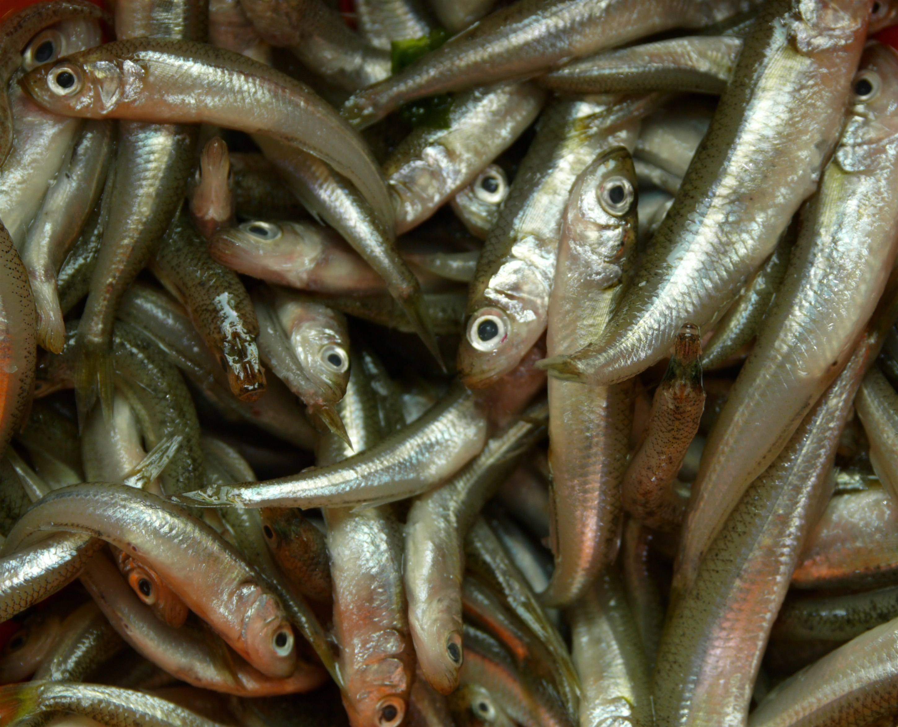 Taking the bait – how to cook whitebait